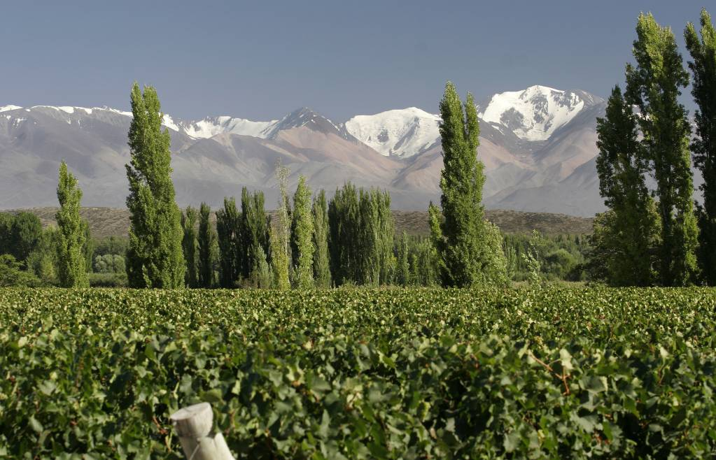 D3-1-Vineyards-at-Uco-Valley-Mendoza